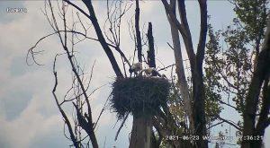 Webcam Storchennnest
